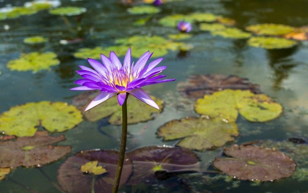 Het vierde geheim van het zelfgenezend vermogen: acceptatie en hoop op genezing