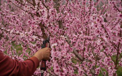 Loslaten wat niet meer nodig is geeft bloei